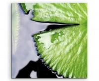 Naturfotografie – Lotusblatt im Wasser auf Leinwand
