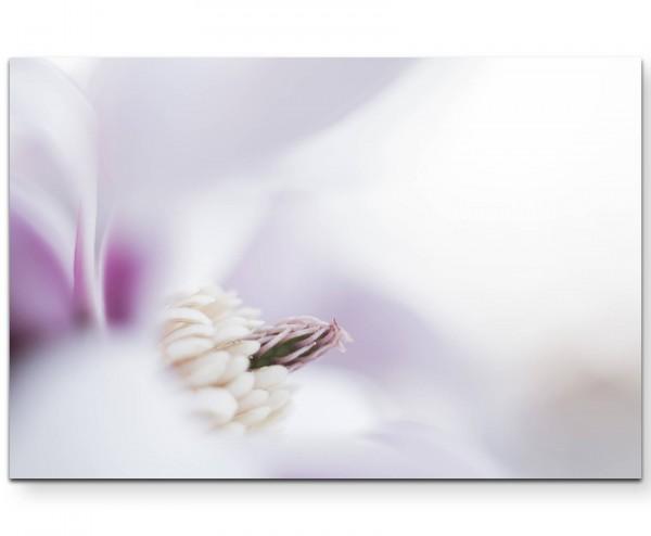 Magnolienblüte im Detail - Leinwandbild