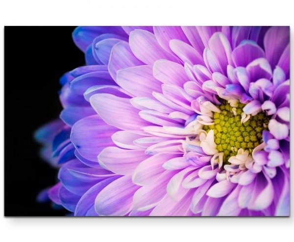 Violette Blume mit blauen Akzenten - Leinwandbild