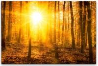 Sonnenuntergang in Wäldern Wandbild in verschiedenen Größen