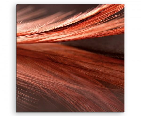 Naturfotografie – Rot orange Nahaufnahme einer Feder auf Leinwand
