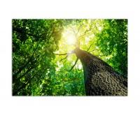 120x80cm Baumkrone Wald Sonnenstrahlen Natur