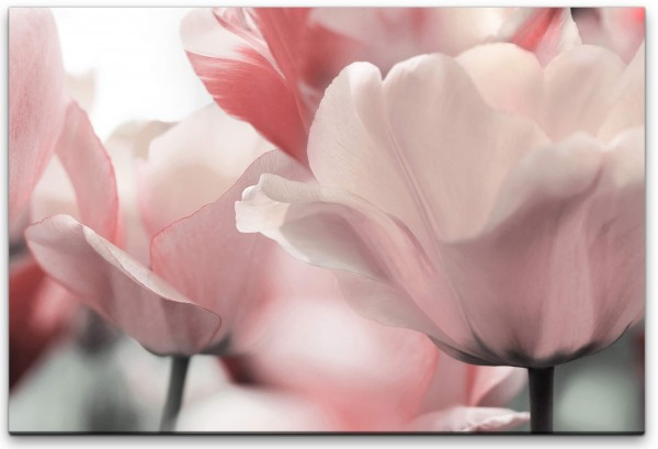 Tulpen Wandbild in verschiedenen Größen