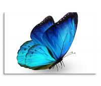 120x80cm Wandbild Schmetterling Nahaufnahme blau