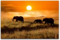 Familie von Elefanten Wandbild in verschiedenen Größen