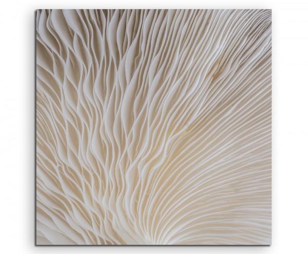 Naturfotografie – Sajor Caju Pilz auf Leinwand exklusives Wandbild moderne Fotografie für ihre Wand