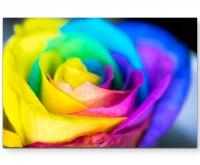 Mehrfarbige Rose - Leinwandbild