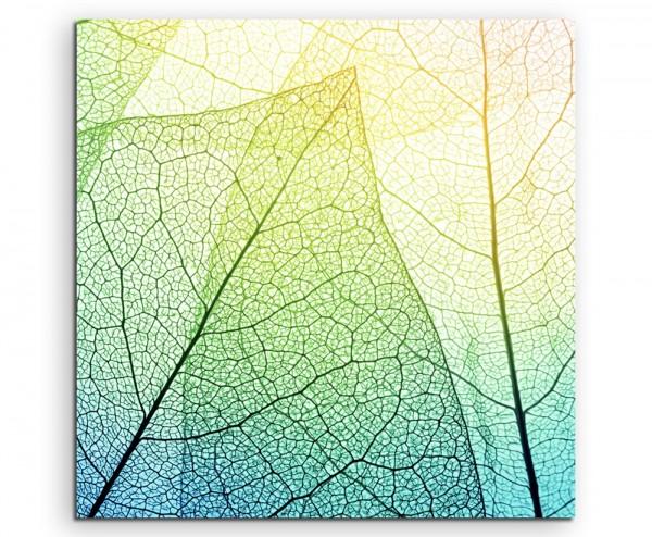 Naturfotografie – Blätter mit Netzstruktur auf Leinwand