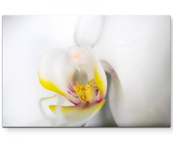 Weiße Orchidee im Detail - Leinwandbild