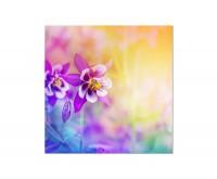 80x80cm Blume Blüte bunt Hintergrund