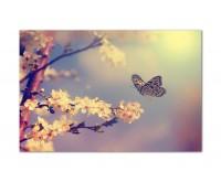120x80cm Kirschblüten Schmetterling Frühling Natur