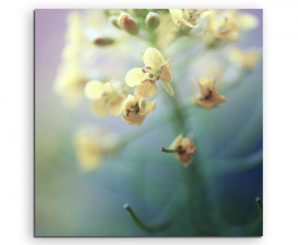 Naturfotografie – Gelbe Orchideen auf Leinwand