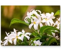 Weiße Blume mit gelben Akzenten - Leinwandbild