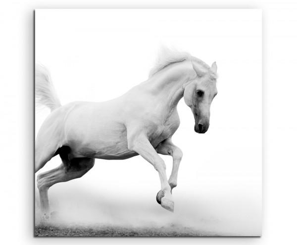 Tierfotografie – Weißer Araberhengst bei Nebel auf Leinwand