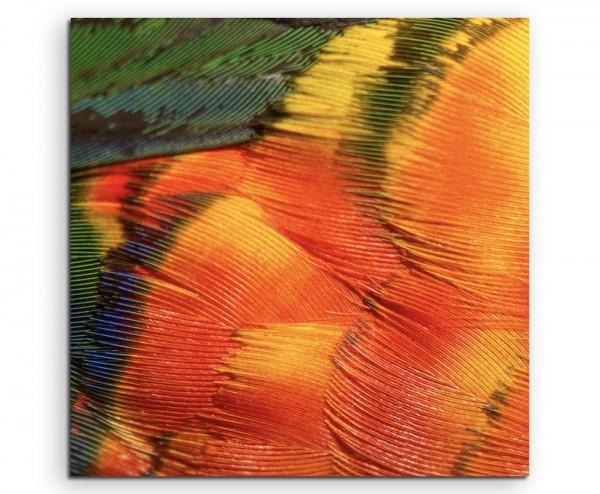 Tierfotografie – Bunte Prachtlori Papagei Federn auf Leinwand