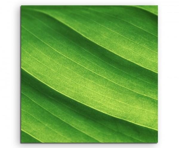 Naturfotografie – Frische hellgrüne Blätter auf Leinwand