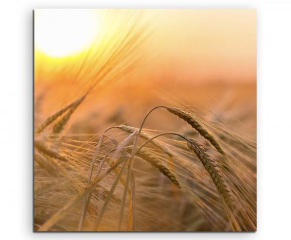 Naturfotografie – Goldenes Weizenfeld in der Sonne auf Leinwand