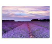 120x80cm Wandbild Provence Lavendelfeld Sommer Sonnenuntergang