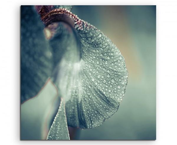 Naturfotografie – Irisblüte mit Regentropfen auf Leinwand