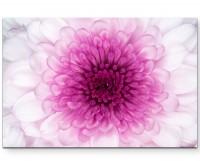 Wunderschöne pinke Blüte – Nahaufnahme - Leinwandbild