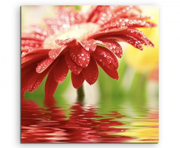 Naturfotografie – Rote blumen über Wasseroberfläche auf Leinwand