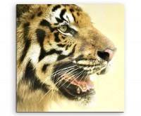 Tierfotografie – Seitenprofil vom bengalischer Königstiger auf Leinwand
