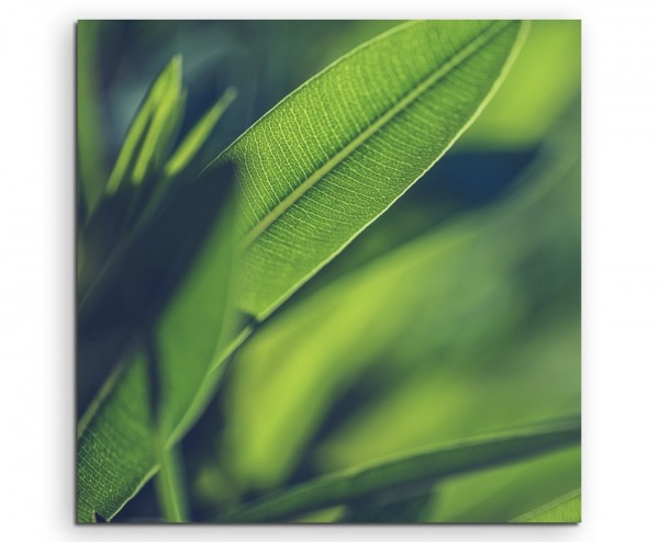 Naturfotografie – Grüne Pflanzen Hintergrund auf Leinwand