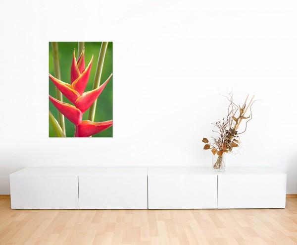 120x80cm Helikoniengewächs Blume Nahaufnahme