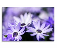 120x80cm Wandbild Blumen Blüten Nahaufnahme