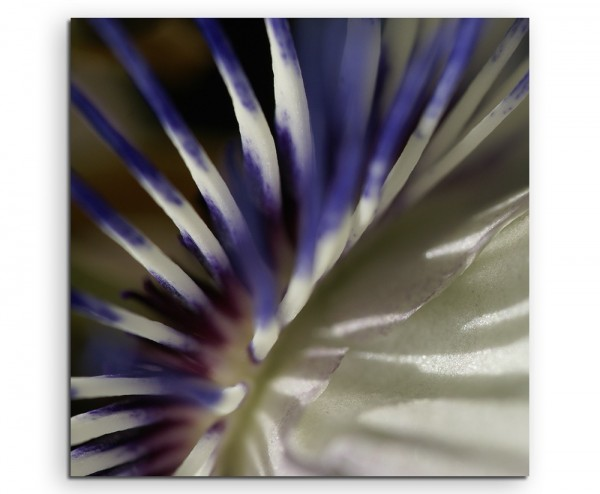 Naturfotografie – Weiß blaue Passionsblumen auf Leinwand exklusives Wandbild moderne Fotografie für
