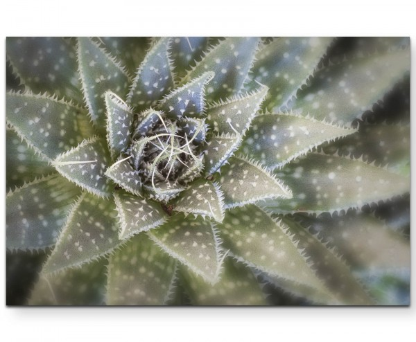 Kaktus von oben - Leinwandbild