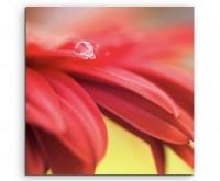 Naturfotografie – Rote Blütenblätter auf Leinwand exklusives Wandbild moderne Fotografie für ihre Wa