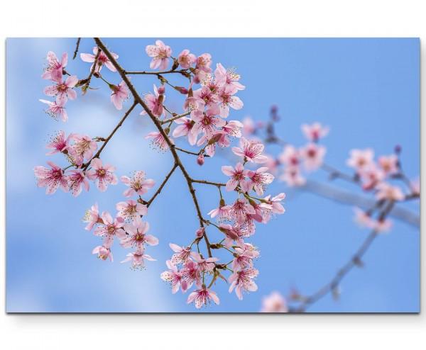 Pinke Frühlingsblüten - Leinwandbild