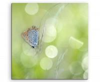 Naturfotografie – Schmetterling mit Frühlingswiese auf Leinwand