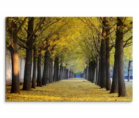 120x80cm Wandbild Ginkgobäume Allee Herbst