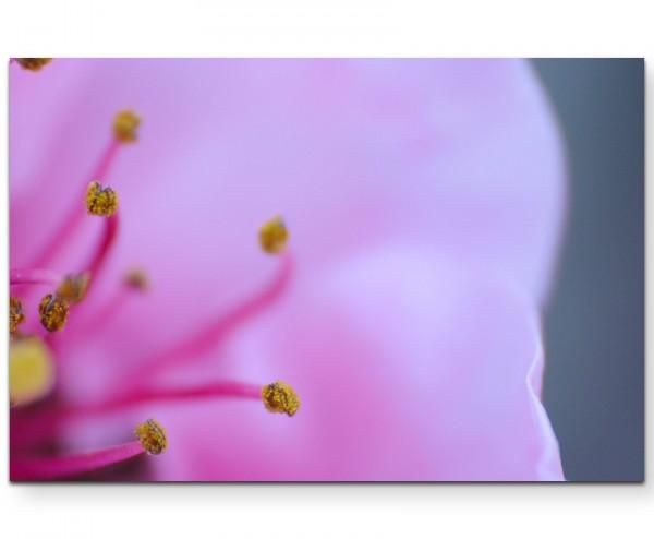 Romantische rosa Blüte - Leinwandbild