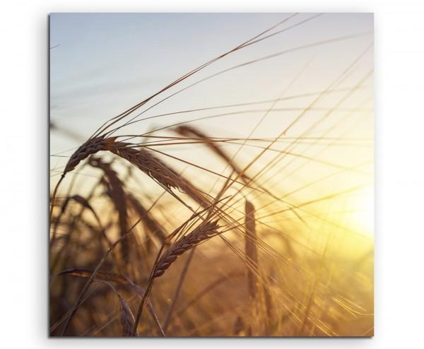 Naturfotografie – Weizenfeld bei Sonnenaufgang auf Leinwand exklusives Wandbild moderne Fotografie f