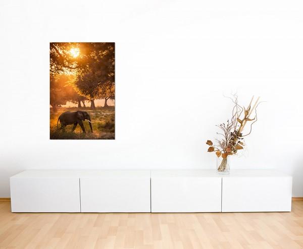 120x60cm Elefant Wald Sonnenstrahlen Wiese