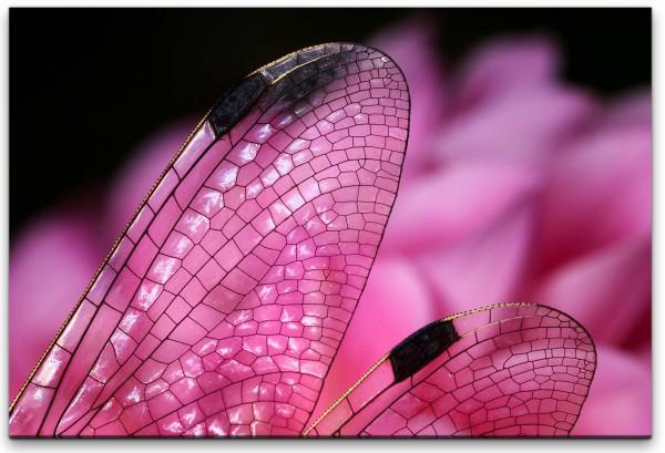 Libellen in Pink Wandbild in verschiedenen Größen