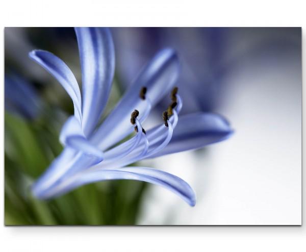 Blüte in blassem Blau - Leinwandbild
