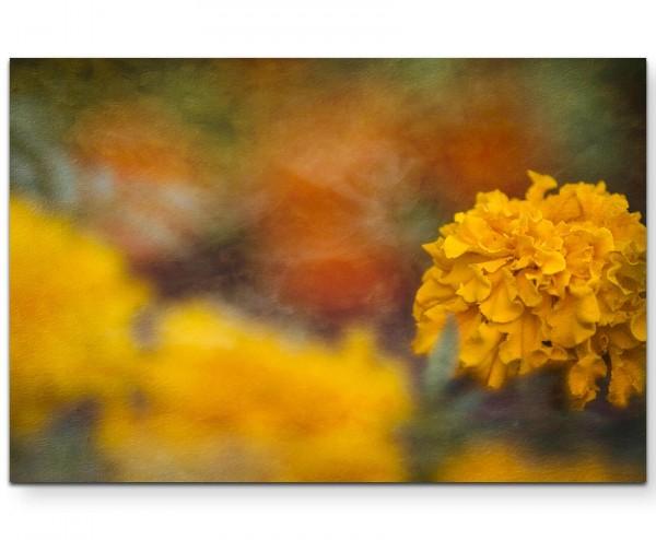 Mehrere Ringelblumenpflanzen, eine Pflanze im Fokus - Leinwandbild