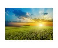 120x80cm Wiese Gras Himmel Sonnenuntergang