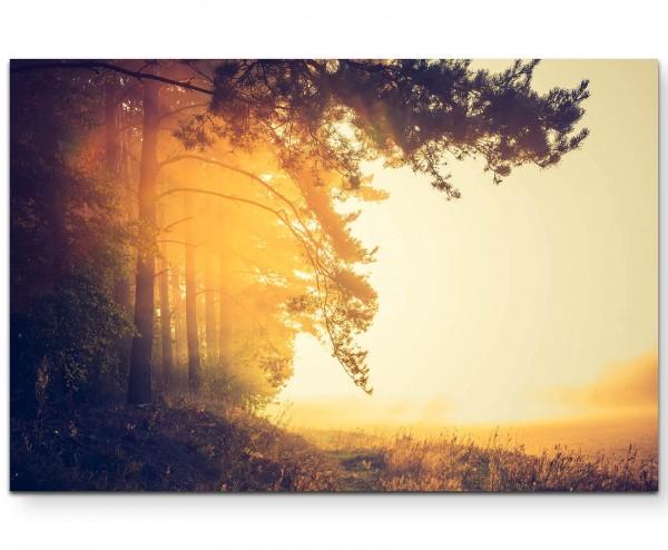 Waldrand, Sonnenstrahlen - Leinwandbild