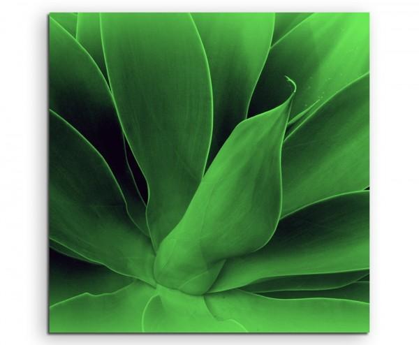 Naturfotografie – Knallgrüne Agavenblätter auf Leinwand