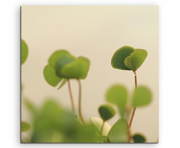 Naturfotografie – Grüner Klee auf Leinwand