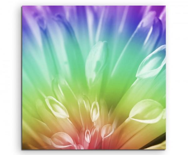 Naturfotografie – abstrakt modern chic chic dekorativ schön deko schön deko e Blüte in Regenbogenfa