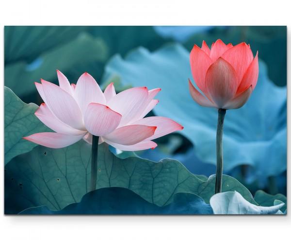 Lotusblumen - Leinwandbild