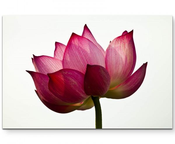 Lotusblüte und weißer Hintergrund - Leinwandbild