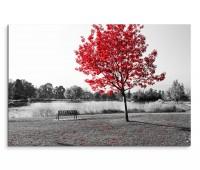 120x80cm Wandbild Park Bank Teich schwarz weiß Baum rote Blätter