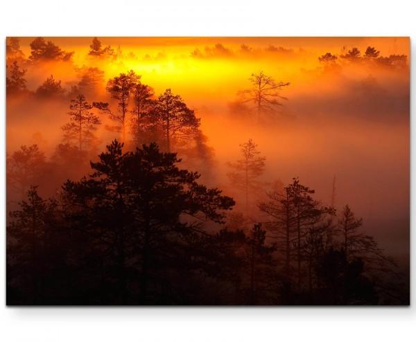 Sonnenaufgang über dem Wald – warme Farben - Leinwandbild